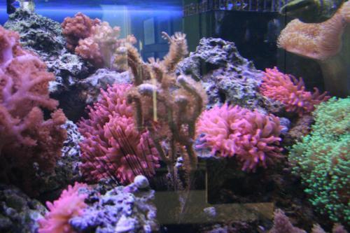 aquarium photos 004