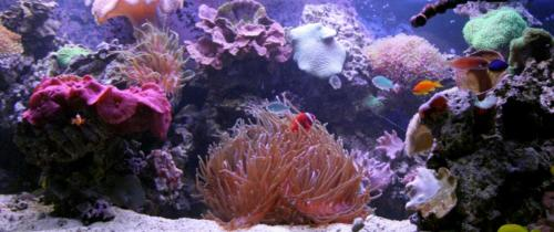 aquarium photos 041