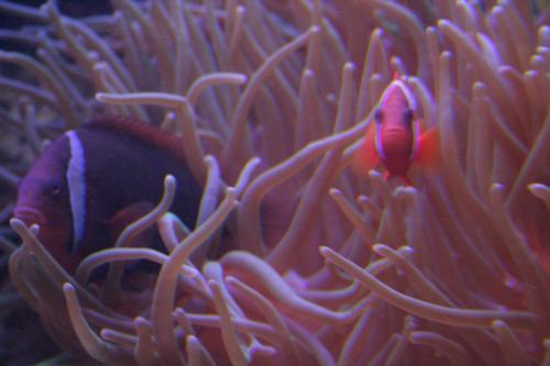 aquarium photos 048