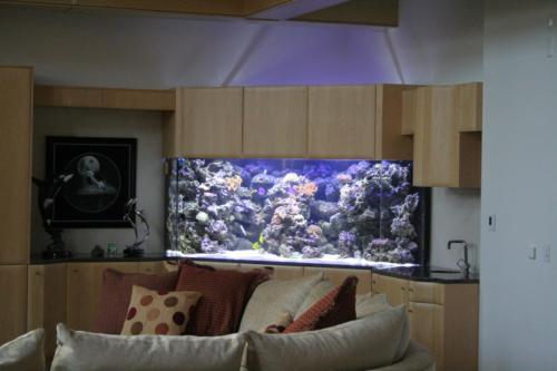 aquarium photos 050