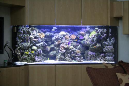 aquarium photos 053