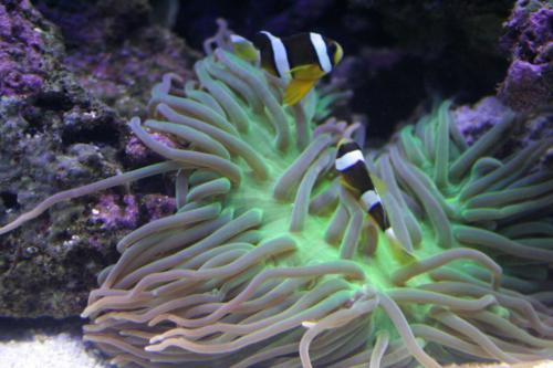 aquarium photos 065