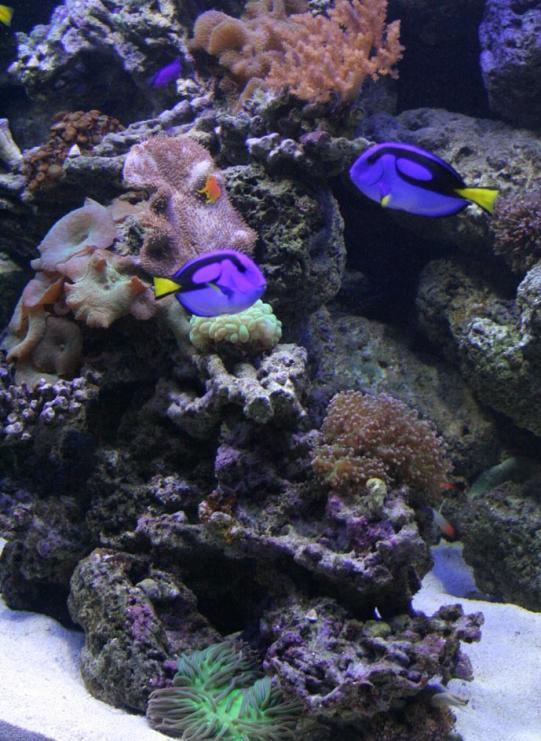 aquarium photos 066