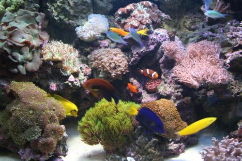 reef aquarium 008